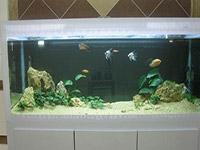 鱼缸摆放风水位置