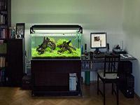 生态鱼缸价格