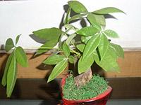 家居风水植物布局 家居风水植物怎么选