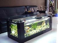 鱼缸尺寸比例