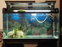 家里鱼缸的摆放风水的注意事项