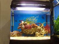 1.5米鱼缸价格