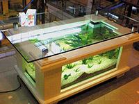 鱼缸尺寸一般多大