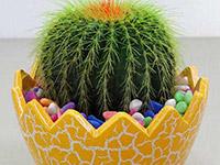 办公室防辐射的植物哪种好