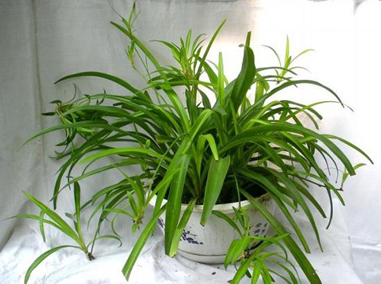 2017年家居风水植物有哪些?