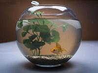 鱼缸尺寸选择