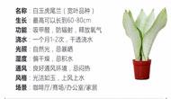 虎尾兰的图片和价格 虎尾兰价格是多少