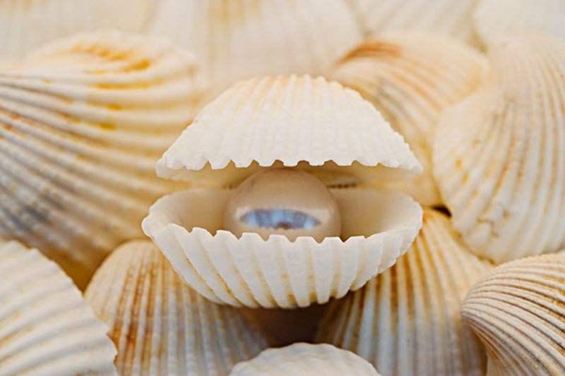 那些萌化你心的贝壳工艺品怎么做?