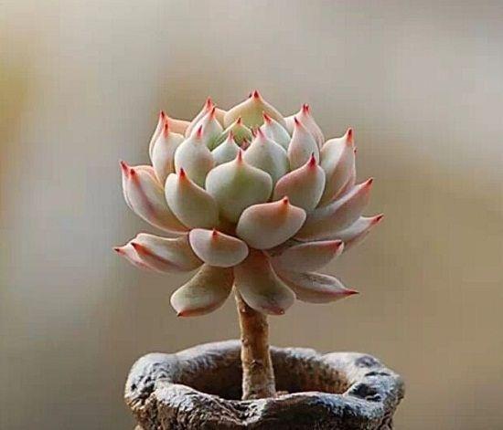 什么植物防辐射效果好?
