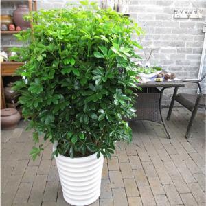 防辐射的植物排名