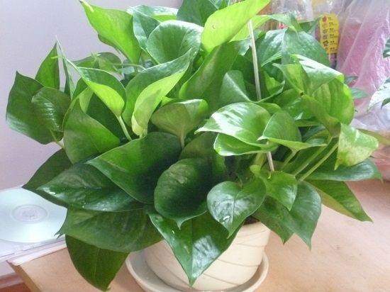 防辐射植物大全---美丽后的保护