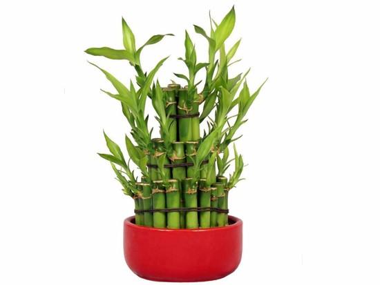 水养富贵竹摆放风水