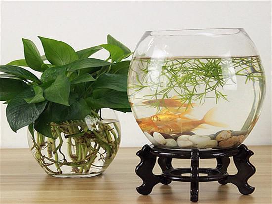 鱼缸放家里哪个位置好