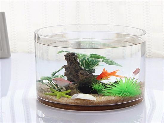宿舍鱼缸摆放位置