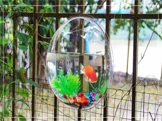 圆形鱼缸养龟用的