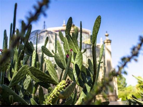 圆柱形仙人掌品种