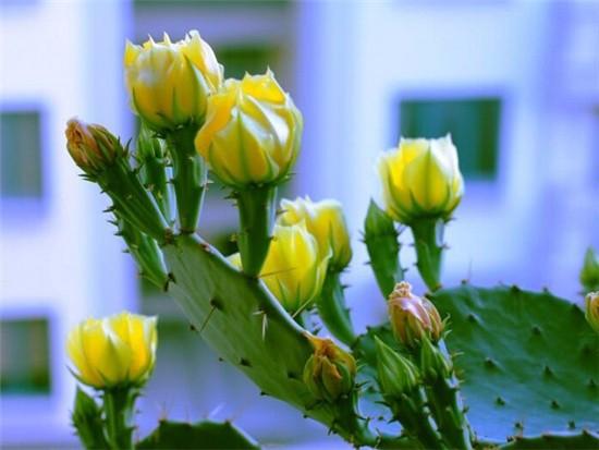 盆栽仙人掌怎么养