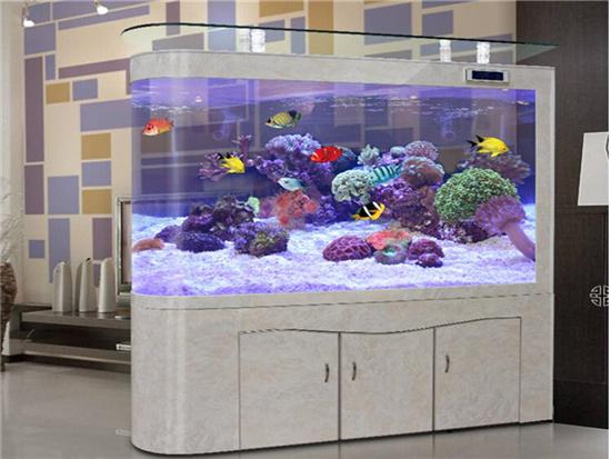 家里用什么颜色的鱼缸好看?有什么顾忌吗
