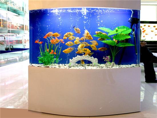 埃及神仙鱼缸底部背景贴什么颜色好看