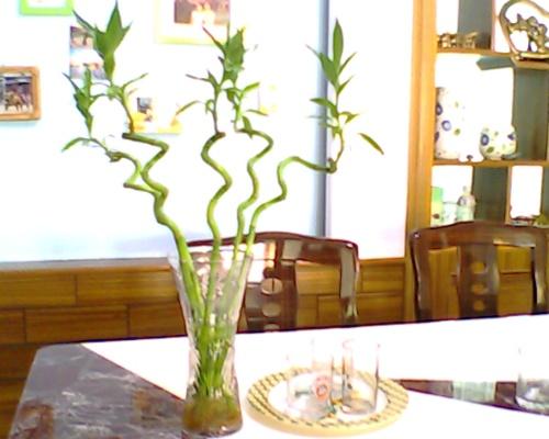 富贵竹怎么养才能更旺盛