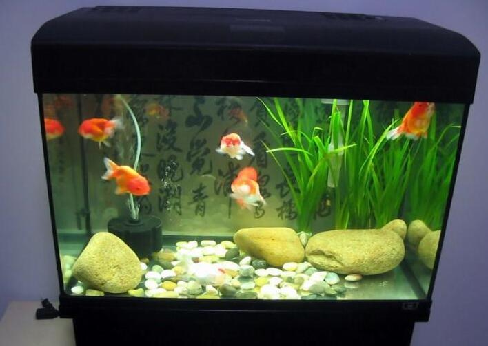 鱼缸风水摆设位置