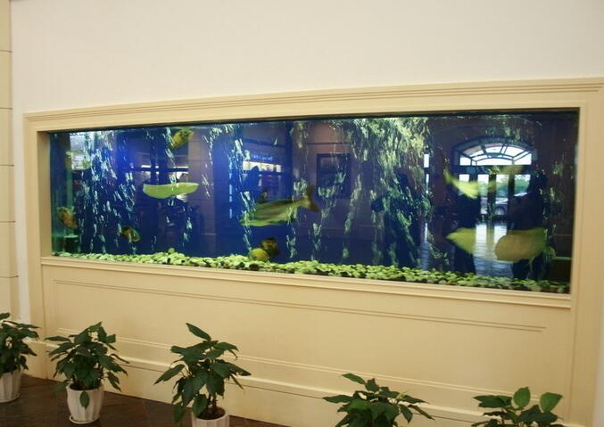 鱼缸风水知识介绍