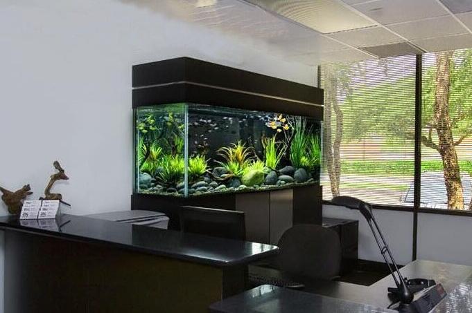 办公室鱼缸风水
