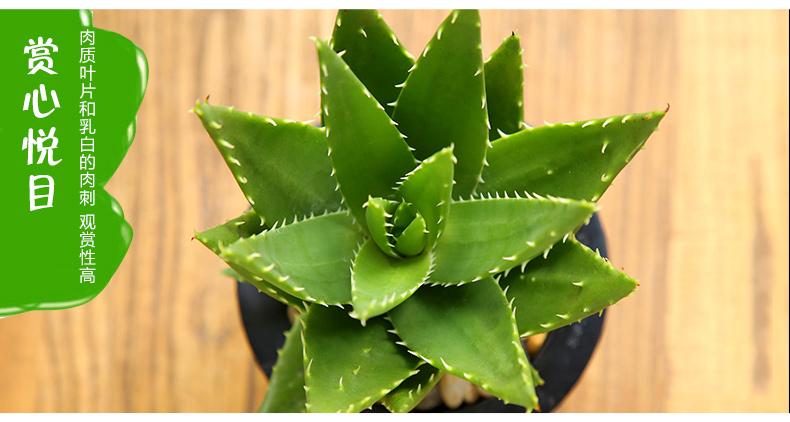 防辐射的植物有用吗