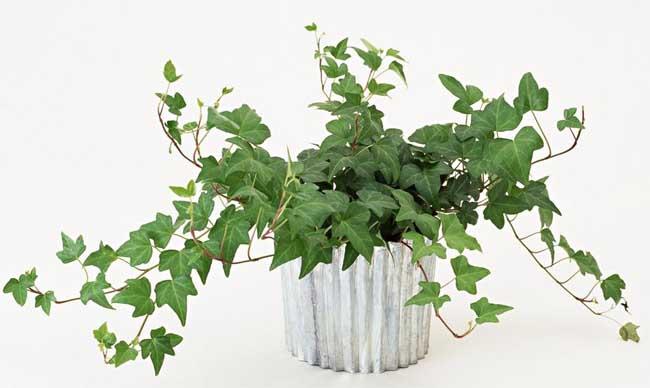 新房除甲醛最好植物