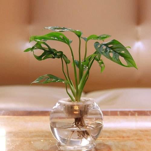 家居风水植物图片