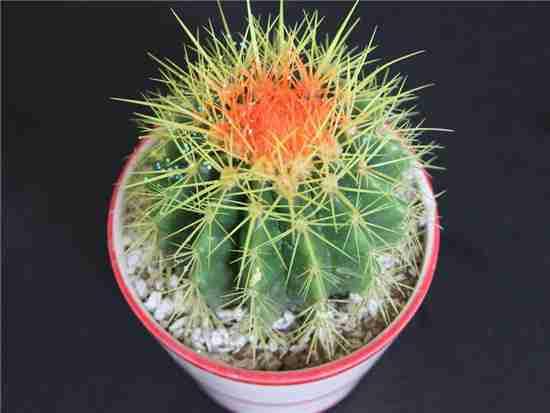 什么植物防辐射比较好