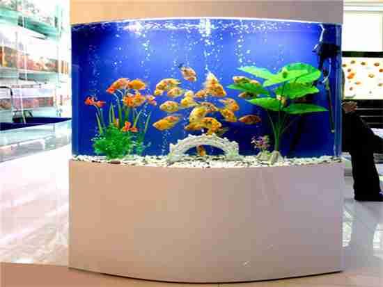 家用鱼缸摆放位置在哪里比较好