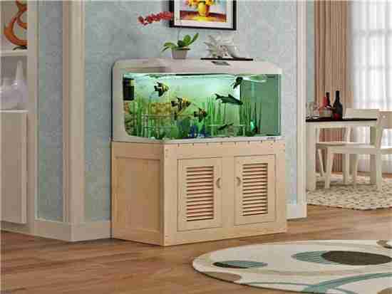 养金龙鱼缸低用什么颜色