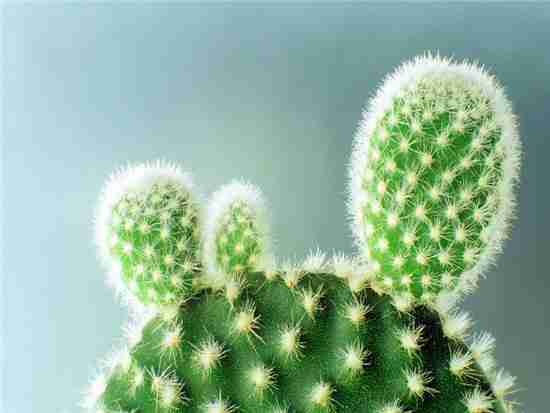常见的仙人掌品种都有哪些?