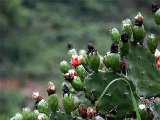 怎么养盆栽仙人掌