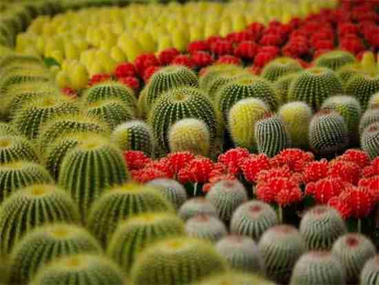 防辐射的植物有哪些