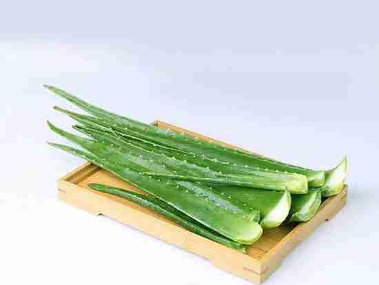 水培芦荟的养殖方法具体有哪些?