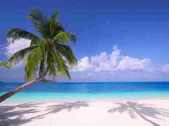 马尔代夫蜜月岛如何?