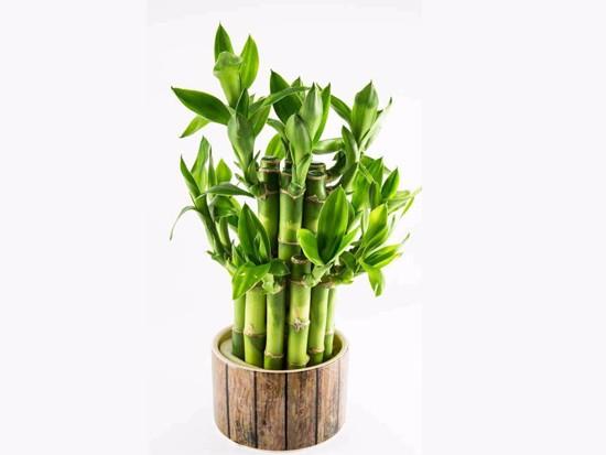 卫生间里放几根富贵竹比较好?有讲究吗