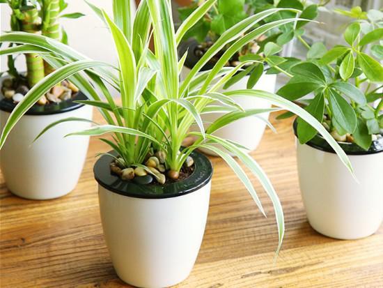 新房装修除甲醛植物哪些比较靠谱?