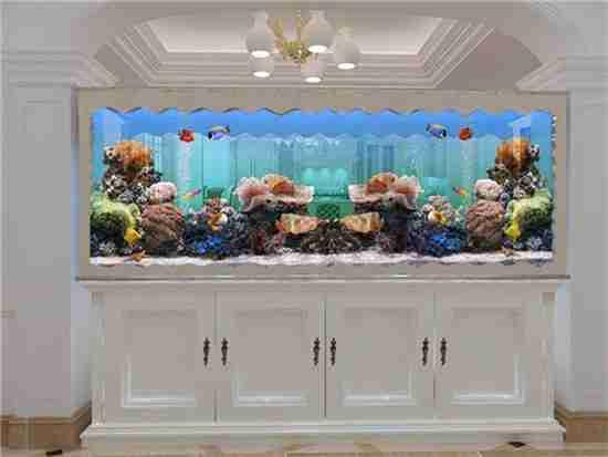 腾龙鱼缸多少钱 贵不贵?