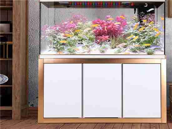 长方形小鱼缸多少钱带图