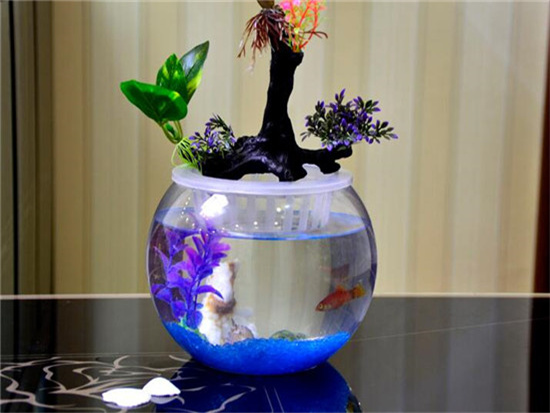 家里鱼缸养鱼有什么讲究,颜色如何搭配会旺财?